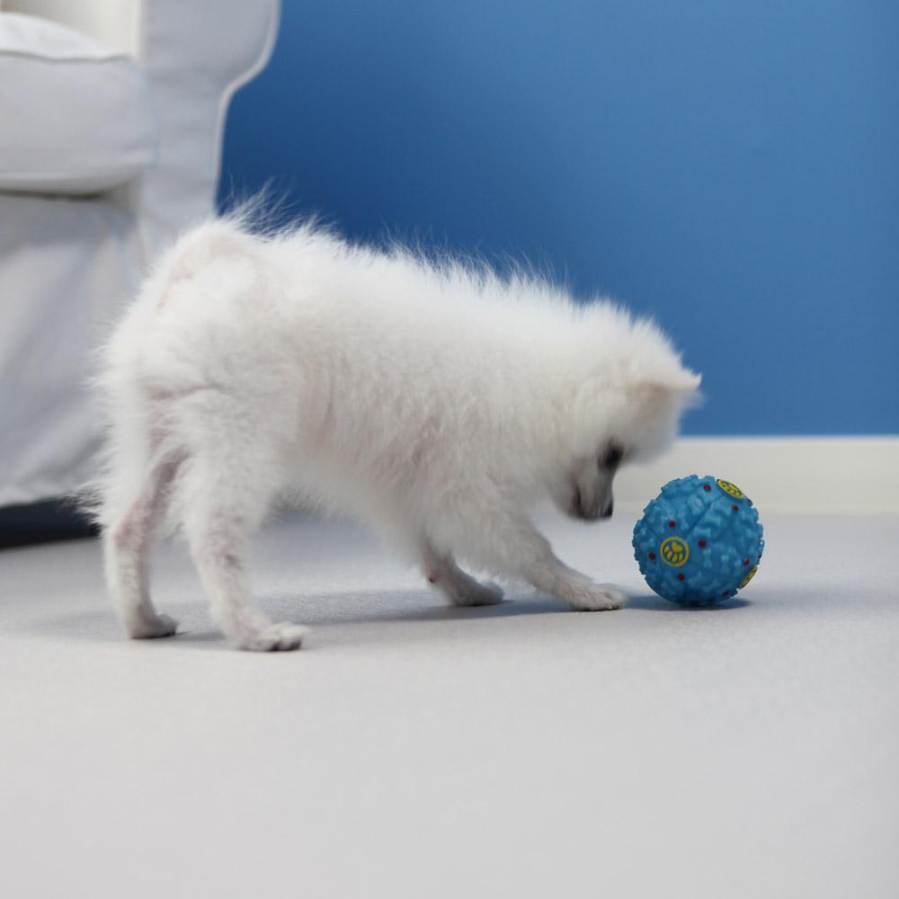 체리펫 강아지 매트